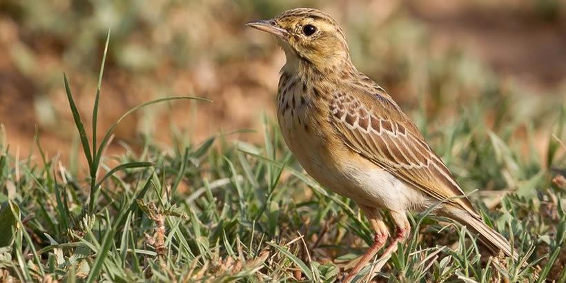 Uganda Birding trip