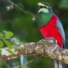 Birding In Uganda, birding watching