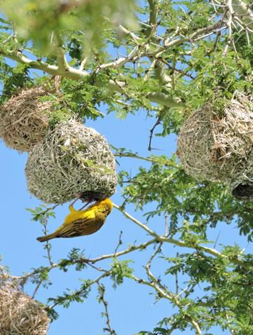 Birding Safari, birding destinations, Birding Tours, African birding tours, Birding in Uganda