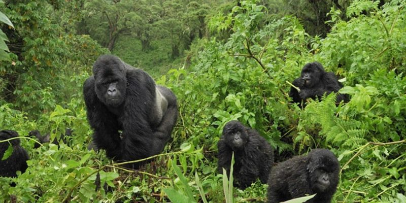 best destination for Gorilla trekking
