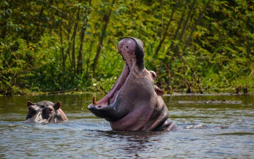 murchison-falls-uganda-boat-