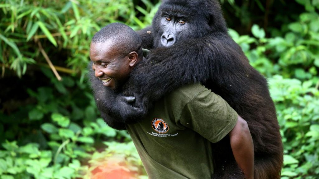 Virunga National Park Congo: Congo Gorilla Trekking Tour and Safaris | Nyiragongo Volcano Hiking