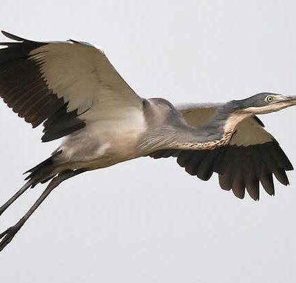 Uganda Birding safari, Safari Tips