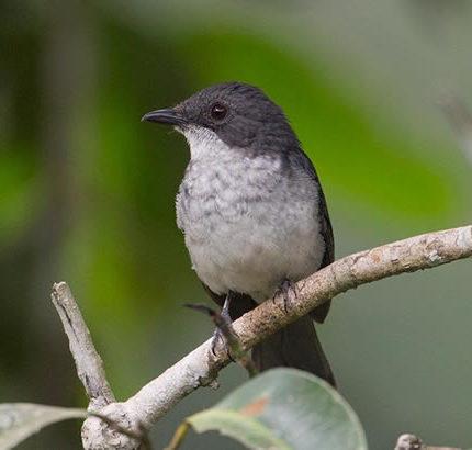Bird Watching in Murchison Falls