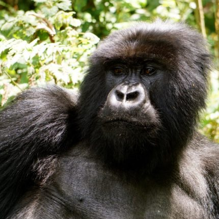 Gorilla trekking, Wildlife tour , Adventure safari