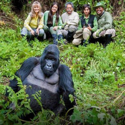 Gorilla trekking uganda, Primate Trekking and Wildlife Tour