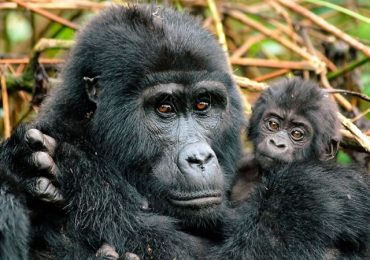 Gorilla tracking sectors in Bwindi Impenetrable National Park.