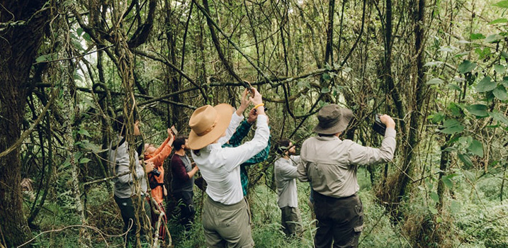 Nature walk In Bwindi National Park