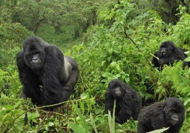 best destination for Gorilla trekking