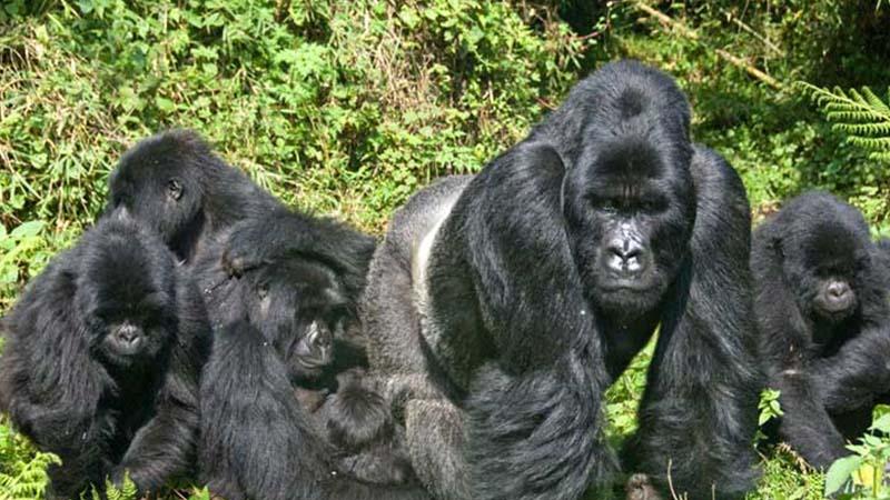 Bwindi Impenetrable National Park Uganda