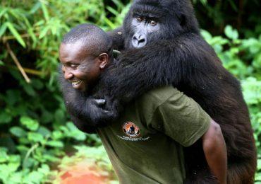 Virunga National Park Congo: Congo Gorilla Trekking Tour and Safaris | Nyiragongo Volcano Hiking
